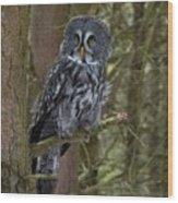 Grey Owl 3 Wood Print