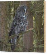 Grey Owl 4 Wood Print