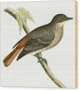 Grey Redstart Wood Print