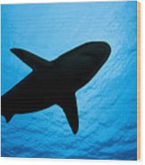 Grey Reef Shark Silhouette Wood Print