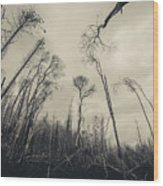 Grey Winds Bellow  Wood Print