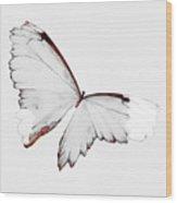 Grey Wings Wood Print