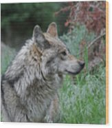 Grey Wolf Profile 2 Wood Print
