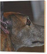 Greyhound Wood Print by Peter  McIntosh