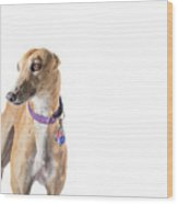 Greyhound Rescue Wood Print
