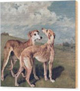 Greyhounds Wood Print by John Emms