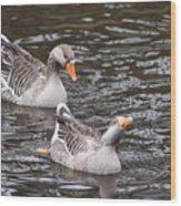 Greylag Geese Wood Print