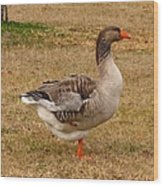 Greylag Goose 1 Wood Print