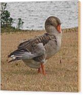 Greylag Goose 2 Wood Print