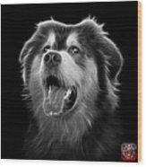 Greyscale Malamute Dog Art - 6536 - Bb Wood Print