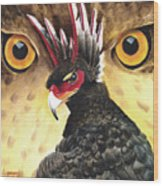 Griffin Sight Wood Print