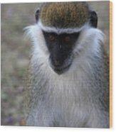 Grivet Monkey Wood Print