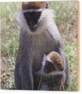 Grivet Monkey At Lake Awassa Wood Print