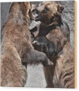 Grizzlies' Playtime 3 Wood Print