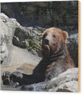 Grizzlies Snacking On Things They Find In A River Wood Print