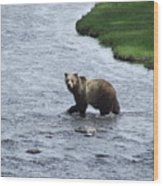 Grizzly At Yellowstone Wood Print