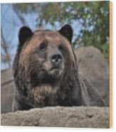 Grizzly Bear 1 Wood Print