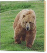 Grizzly Bear Approaching In A Field Wood Print