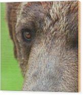 Grizzly Bear Arctos Ursus Wood Print