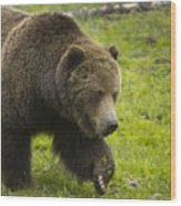 Grizzly Bear Boar-signed-#8517 Wood Print