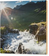 Grizzly Bear Falls Wood Print