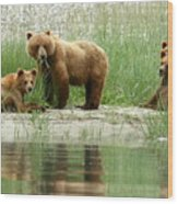 Grizzly Bear Family  Wood Print