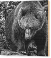 Grizzly Bear In Black And White Wood Print