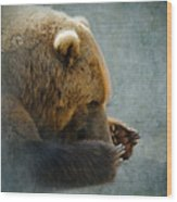 Grizzly Bear Lying Down Wood Print by Betty LaRue