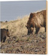 Grizzly Bear Mother And Cub Wood Print