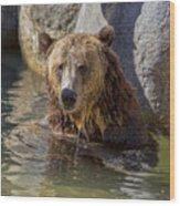 Grizzly Bear - San Diego Zoo Wood Print