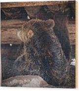 Grizzly Bear Under The Cabin Wood Print