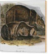 Grizzly Bear (ursus Ferox) Wood Print