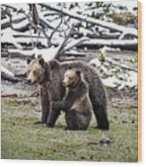 Grizzly Cub Holding Mother Wood Print