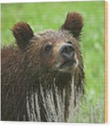 Grizzly Cub Wood Print