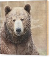 Grizzly Portrait Wood Print