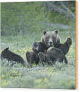 Grizzly Romp - Grand Teton Wood Print by Sandra Bronstein