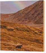 Grizzly Under The Rainbow Wood Print