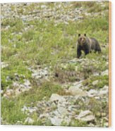 Grizzly Watching People Watching Grizzly No. 2 Wood Print