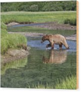 Grizzy Bear Crossing The River Wood Print