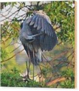 Grooming Blue Heron Wood Print