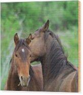 Grooming Horses Wood Print