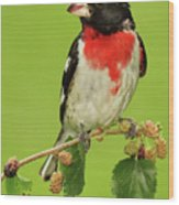 Grosbeak With Mulberry-Stained Beak Wood Print