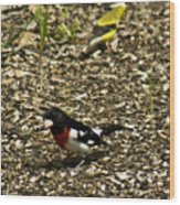 Grosbeak With Quizzical Look Wood Print