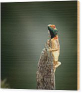 Ground Agama Sunbathing Wood Print