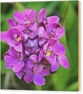 Ground Orchid Wood Print