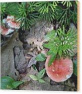 Ground Pine And Fungi Wood Print