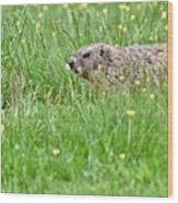 Groundhog In A Field Of Flowers Wood Print
