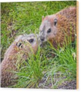 Groundhog Mother Love Wood Print