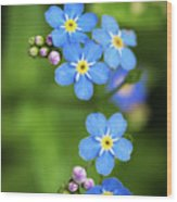 Group Of Blue Flowers Forget-me-not Wood Print