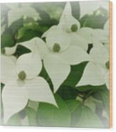 Group Of Chinese Dogwoods Wood Print